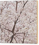 Cherry Blossom Spring Wood Print