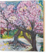 Cherry Blossom Time Wood Print