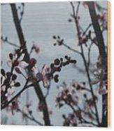 Cherry Blossom Transparency Wood Print