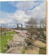 Cherry Blossom Trees At Portland Waterfront Wood Print