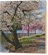 Cherry Blossom Trees Of Branch Brook Park 17 Wood Print