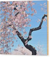 Cherry Blossom Trilogy II Wood Print