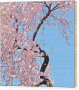 Cherry Blossom Trilogy IIi Wood Print