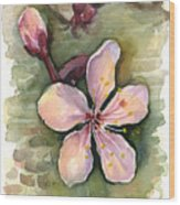 Cherry Blossom Watercolor Wood Print