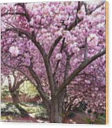 Cherry Blossom Wonder Wood Print