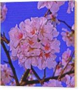 Cherry Blossoms 004 Wood Print