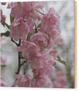 Cherry Blossoms 2 Wood Print
