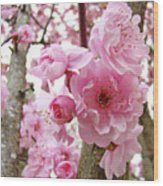 Cherry Blossoms Art Prints 12 Cherry Tree Blossoms Artwork Nature Art Spring Wood Print