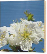 Cherry Blossoms Art White Spring Tree Blossom Baslee Troutman Wood Print