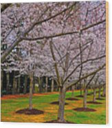 Cherry Blossoms At The Beach Wood Print