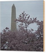 Cherry Blossoms At The Washington Monument Wood Print