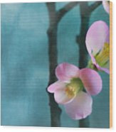 Cherry Blossom Bokeh Wood Print