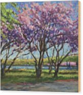 Cherry Blossoms, Central Park Wood Print