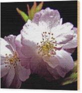 Cherry Blossoms Wood Print by Debra     Vatalaro