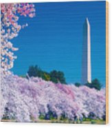 Cherry Blossoms Wood Print by Don Lovett
