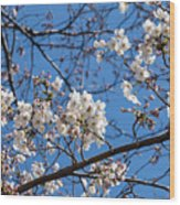 Cherry Blossoms In Hiroshima Wood Print