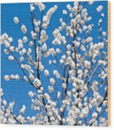 Cherry Blossoms In Julian California Wood Print