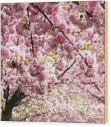 Cherry Blossoms In Milan Italy Wood Print