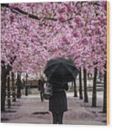 Cherry Blossoms In The Rain Wood Print