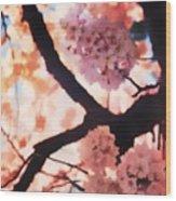 Cherry Blossoms In Washington D.c. Wood Print