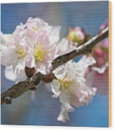 Cherry Blossoms On Blue Wood Print