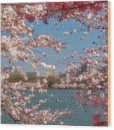 Cherry Blossoms On The Edge Of The Tidal Basin Three Wood Print by Susan Isakson