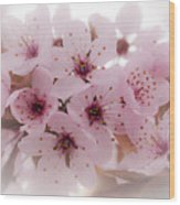Cherry Blossoms Wood Print by Rod Sterling