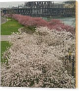 Cherry Blossoms Trees Along Portland Waterfront Wood Print