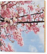 Cherry Blossoms Under Blue Sky Wood Print by Neconote