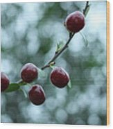 Cherry Constellation  Wood Print