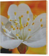 Cherry Flower In The Spring Wood Print