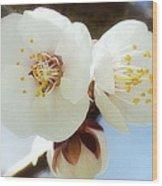 Apricot Flowers II Wood Print