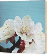 Apricot Flowers IIi Wood Print