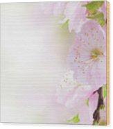 Cherry Flowers In Garden Wood Print