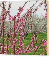 Cherry 'n' Apple Blossoms Wood Print