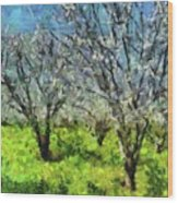 Cherry Orchard Wood Print