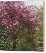 Cherry Spring Blossom Wood Print by Valia Bradshaw