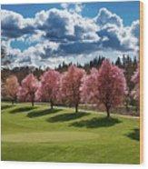 Cherry Tree Bloom Color Wood Print