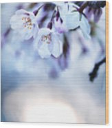 Cherry Tree Blossoms In Morning Sunlight Wood Print