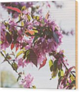 Cherry Tree Flowers Wood Print