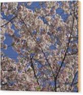 Cherry Tree In Bloom Wood Print