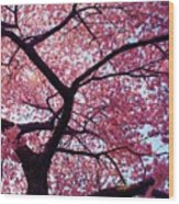 Cherry Tree Wood Print