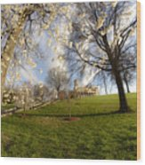 Cherry Trees In Bloom In Nashville Wood Print
