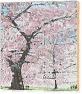 Cherry Trees Wood Print by Patrick Grills