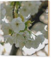 Cherryblossom Flowers 4 Wood Print