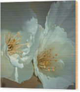 Cherryblossom Flowers Wood Print