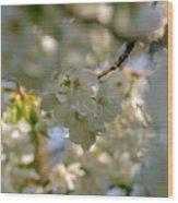 Cherryblossom In Focus Wood Print