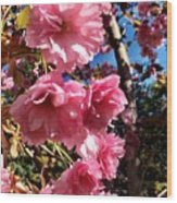 Cherryblossoms Perspective  Wood Print