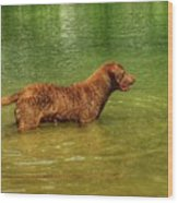 Chesapeake Bay Retriever Wood Print