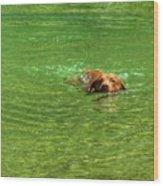Chesapeake Bay Retriever Swimming Wood Print